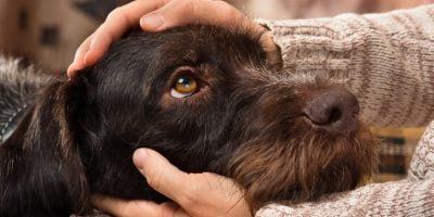 Pampering Dog Before Euthanize